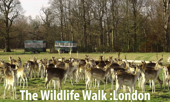 The Wildlife Walk